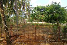 68 cent of residential land for sale in Thrissur , Viyyur. 5.3 km from swaraj round. location: valiyaparambu, kuttoor, thrissur. located in the viyoor to mundur road.