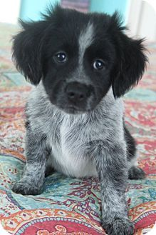116 Best Beautiful Hybrid Dogs Images Cute Dogs Cute Baby Dogs