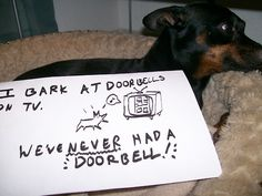 Dog shaming website!