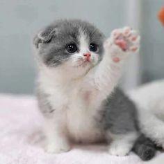 Soooo cute
