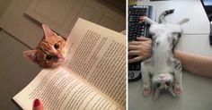 13 katte som ganske enkelt nægter at lade deres ejere have et privatliv - nummer 9 er slet ikke til at stå for