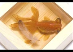 "Riusuke Fukahori ""Goldfish Salvation"" painted goldfish"