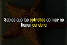 ✓ Entérate de Noticias Curiosas De Ciencia, Zico Uriosidades y Noticias Curiosas Verano  ➫➫➫ http://www.cienic.com/curiosidades-sobre-estados-unidos/