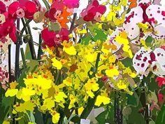 """Orchidee in nove versioni """"Come tu mi vuoi""""... per chi ama la possibilita' di scegliere http://ilmioblogdiprova.over-blog.it/orchidee"""