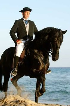 Menorquin Horse from Menorca, Spain