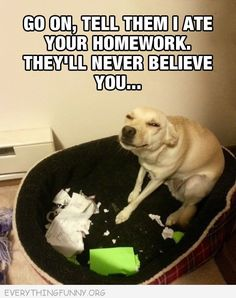 funny caption go on tell them i ate your homework they won't believe you funny dog