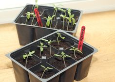 Which seeds to start inside vs. outside. Some vegetables and herbs need to be started indoors and then transplanted while others need to be sown directly into your garden. But which are which? Read this article to find out.