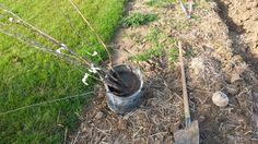 Výsadba ovocných stromčekov
