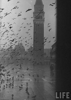 Venice, Italy. Pigeons consuming space in Piazza San Marco. 1952    Photographer:Dmitri Kessel  Thanks to yama-bato
