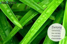 A może zimą zieleń zagości w Twoim domu? #mobene #meble #zieleń #kolor