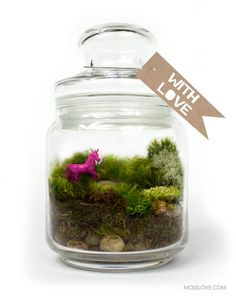 An awesome hand-painted hot pink unicorn in a lovely moss terrarium. Sure to brighten up any desk!  CONTENTS  -Fully assembled live moss
