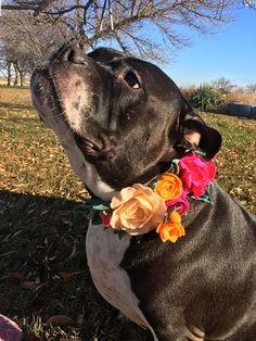 Blume Kragen Blumenhalsband Hund Geburtstag Hund