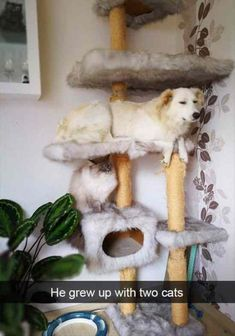 Funny Animal Pictures Of The Day - 24 Pics #FunnyPictures #dogsfunnyart