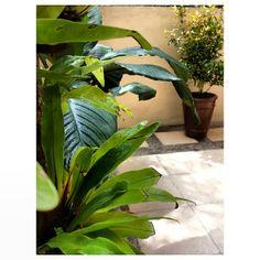 #saturday #morning #coffee time w/ #plants #relaxing #philippines #土曜日 の朝は #観葉植物 を見ながら #コーヒー #フィリピン