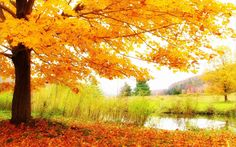 2560 x 1600px autumn scenery wallpaper hd pack by Edie Blare