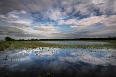 Blue Reflection, the Baker Wetlands, Fine Art Photography by Pitts Photography