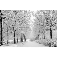 TheHaiRazor Winter Hair Tips! ❤ liked on Polyvore featuring backgrounds, pictures, winter, photos, nature, scenery, text, quotes, phrase and saying