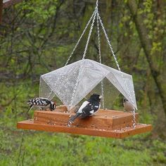 Super Tray with Clear Cover Bird Feeder