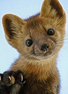 158 best animals images on pinterest fluffy animals funny animals