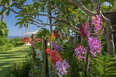 We are excited to get our latest batch of images from Jamaica. Special thanks to Stephen Dunn photography for the wonderful photos #landscape #landscapedesign #landscapearchitecture #jamaica #orchids #garden #gardendesign #crla