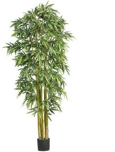 7' Biggy Style Bamboo Silk Tree 7' Biggy Style Bamboo Silk Tree by DSD. $552.00. Brand Name: DSD Mfg#: 1066784. This product may be prohibited inbound shipment to your destination.. Please refer to SKU# ATR25212148 when you inquire.. Picture may wrongfully represent. Please read title and description thoroughly.. Shipping Weight: 9.00 lbs. 7' Biggy Style Bamboo Silk Tree. Bring the lush foliage of the tropics indoors! With thousands of luxurious leaves and stan...