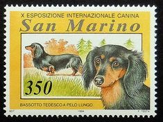 Longhaired dachshund dog Postage Stamp Art by PassionGiftStampArt
