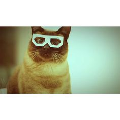 Skifcha The Dubstep Hipster Cat Is Your Friday Nightmare Fuel ❤ liked on Polyvore featuring pictures