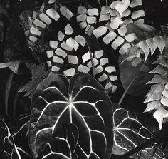 1979 Botanical Garden, San Francisco by Brett Weston