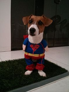 Did I hear some one call for Super Dog? I'm coming to the rescue!