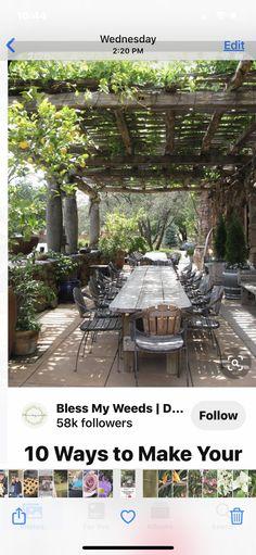 Backyard Ideas, Weed, Pergola, Outdoor Structures, Make It Yourself, Outdoor Pergola, Marijuana Plants, Yard Crashers, Garden Ideas