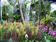 Chelsea Flower Show 2015 RHS - Royal Horticultural Society​ : The Hidden Beauty of Kranji http://www.pariscotejardin.fr/2015/08/chelsea-flower-show-2015-the-hidden-beauty-of-kranji/