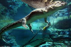 Underwater adventure: The nine-foot-high container is known as the Cage Of Death, and prot...