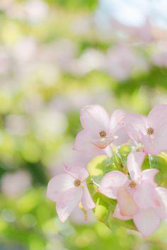 #Pink Dogwood #inspiration | Au Petit Goût