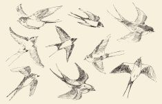 Swallows Flying Bird Vector, Hand Drawn, Sketch vector art illustration