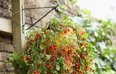 Hanging baskets aren't just for flowers. Save garden space by getting these crops off the ground.