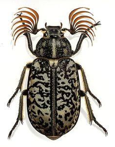 Fuller Beetle, also by Bernard Durin,
