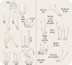 Realistic Domesticated Feline Front Leg Tutorial by Anti-Dark-Heart on DeviantArt