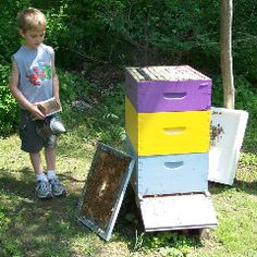 Beekeeping and Children | Honey Bee Colony Removal