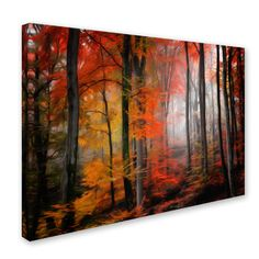 'Wildly Red' by Philippe Sainte-Laudy Photographic Print on Wrapped Canvas
