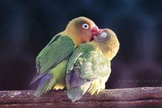 Inseparable Bird by Ibrahim Oubahmane on 500px