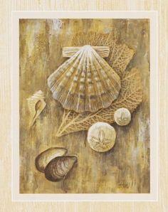Amazon.com: 2 Sea Shell Art Prints Sand Dollar Posters Home Decor: Home & Kitchen