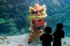 Children watch as Malaysian divers perform a lion dance during the Chinese New Year celebrations at the Aquaria KLCC underwater park in Kuala Lumpur, Malaysia.   Image: AZHAR RAHIM/EPA   www.piclectica.com #piclectica