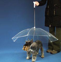 Wacky Pet Accessories -- dogbrella, butt covers, dog snuggies...