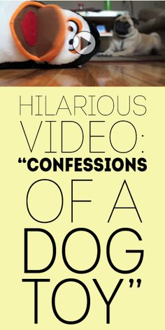 Hilarious Video: Confessions of a Dog Toy