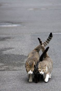 Two cats protect the black cat in the middle. Knitting tails Photo by Yutaka Yuhara -- National Geographic Your Shot
