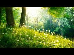 ▶ 3 HOURS of Relaxing Music - Relaxation Music, Spa, Sleep, Study, Background - YouTube