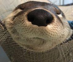 In Otter News (@Otter_News) | Twitter
