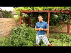Easy Tomato Shake Pollination with California Gardener