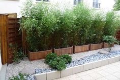 While common in most Asian homes that have enough land surrounding it, bamboo garden are not something that you usually hear about in the American home. Fence Plants, Bamboo Plants, Potted Bamboo, Backyard Patio, Backyard Landscaping, Small Gardens, Outdoor Gardens, Landscape Design, Garden Design