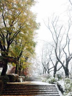 Snow in Tokyo Japan...